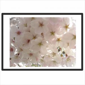 blossom500