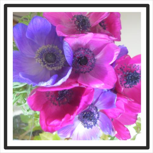 flowers500